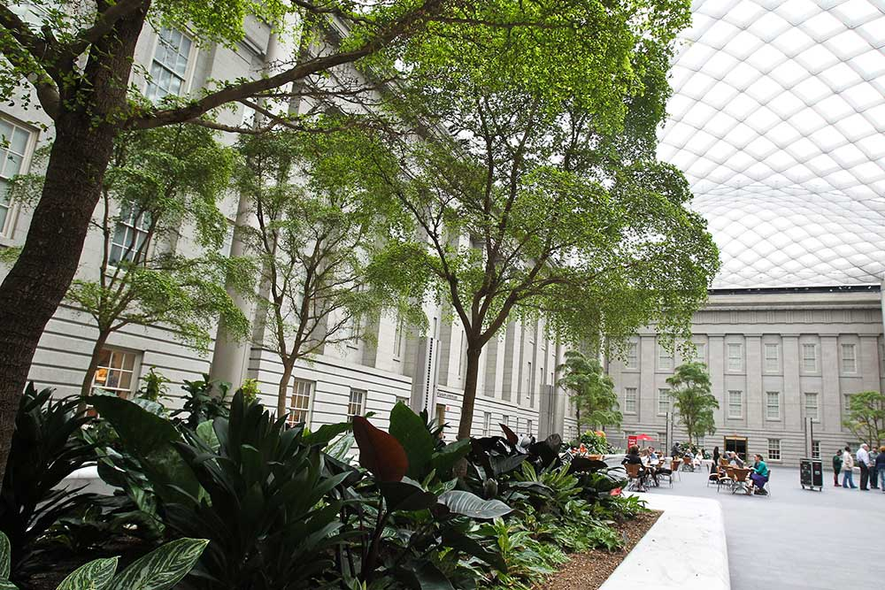 View of trees and foliage in the courtyard